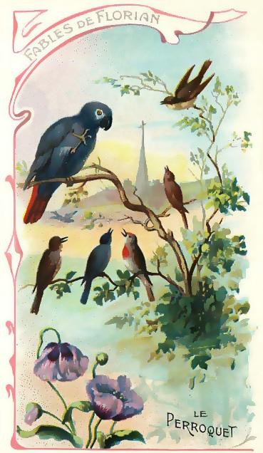 le-perroquet-florian-cropped
