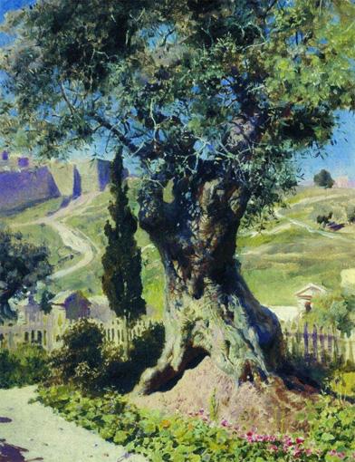 olive_tree2_1882