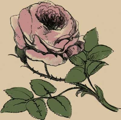 rose 1850 illus-0021-1-small