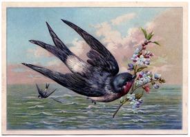 SwallowOcean-GraphicsFairy1