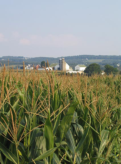 Photo of a Farm that Grows Corn