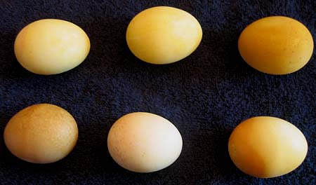 Photo of Eggs Dyed Naturally Yellow