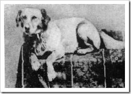 Abraham  Lincoln's Dog Fido