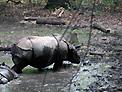 Photo of a Tiny Hippopotamus