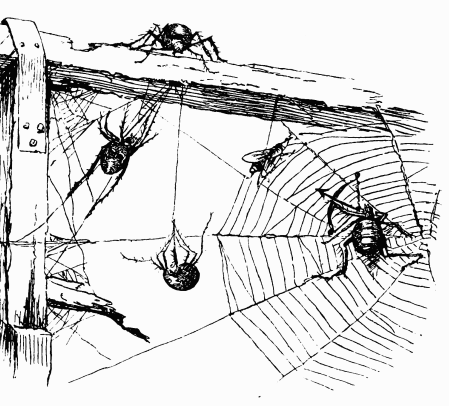 A noiseless patient spider poem by walt whitman with recording a noiseless patient ccuart Image collections