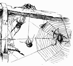 i_057 spider