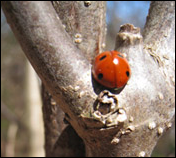 Names for Ladybugs Around the World