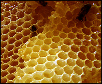 Photo of Beeswax