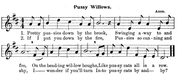 pussy_willows