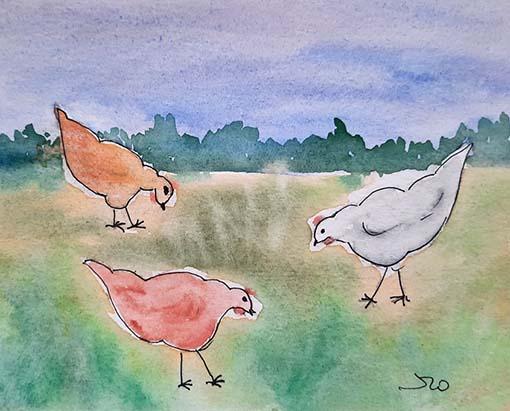 Doidas andam as galinhas - Chansons enfantines portugaises - Portugal - Mama Lisa's World en français: Comptines et chansons pour les enfants du monde entier  - Intro Image
