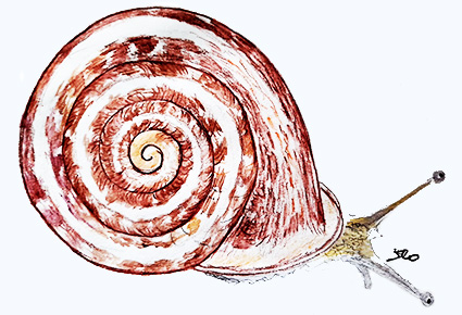 Snail Rhymes