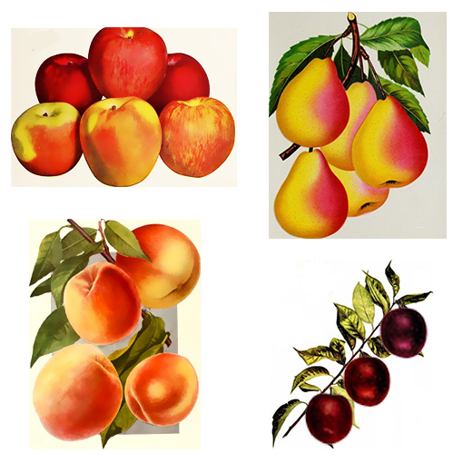 If Apples Were Pears -   - American Children's Songs - The USA - Mama Lisa's World: Children's Songs and Rhymes from Around the World  - Intro Image