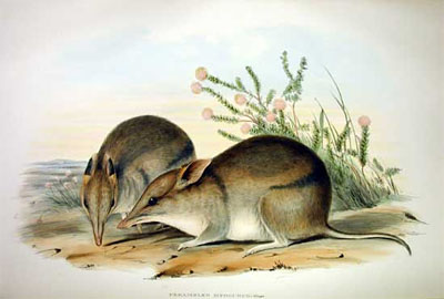 Little Grey Bandicoot - Australian Children's Songs - Australia - Mama Lisa's World: Children's Songs and Rhymes from Around the World  - Intro Image