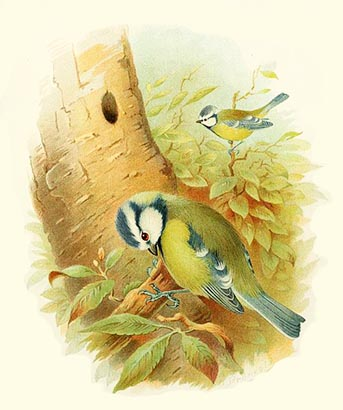 The Blue Bird - Scottish Children's Songs - Scotland - Mama Lisa's World: Children's Songs and Rhymes from Around the World  - Intro Image