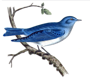 Here Comes a Bluebird in Through My Window - Chansons enfantines anglaises - Angleterre - Mama Lisa's World en français: Comptines et chansons pour les enfants du monde entier  - Intro Image