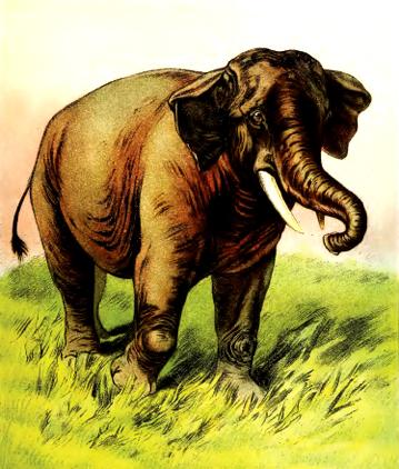 Un éléphant, ça trompe - Chansons enfantines françaises - France - Mama Lisa's World en français: Comptines et chansons pour les enfants du monde entier  - Intro Image