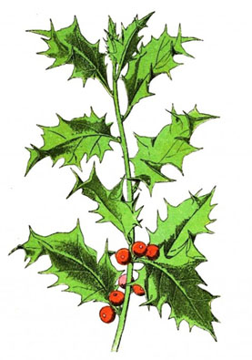 The Holly and The Ivy - English Children's Songs - England - Mama Lisa's World: Children's Songs and Rhymes from Around the World  - Intro Image