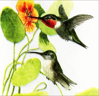 Humming-bird Song - American Children's Songs - The USA - Mama Lisa's World: Children's Songs and Rhymes from Around the World  - Intro Image