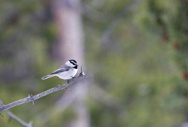 Little Bird, Little Bird - Chansons enfantines  américaines - États-Unis - Mama Lisa's World en français: Comptines et chansons pour les enfants du monde entier  - Intro Image