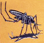 Mosquito One, Mosquito Two - Caribbean Children's Songs - West Indies - Caribbean - Mama Lisa's World: Children's Songs and Rhymes from Around the World  - Intro Image
