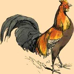 Mi gallo se murió ayer