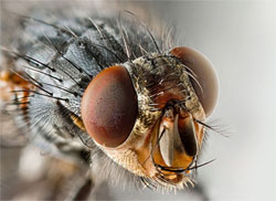 Close-up Photo of a Fly