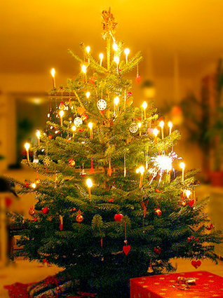 Oh Tannenbaum Originaltext.O Christmas Tree O Tannenbaum Many Versions Around The World